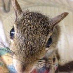 I Found a Squirrel Squirrel Head