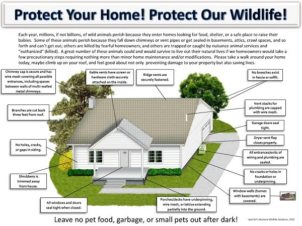 Nuisance Wildlife Prevention