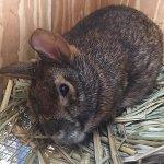 Symbolic Adoptions Marshall the Marsh Rabbit