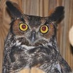 Become a Member Owl Membership