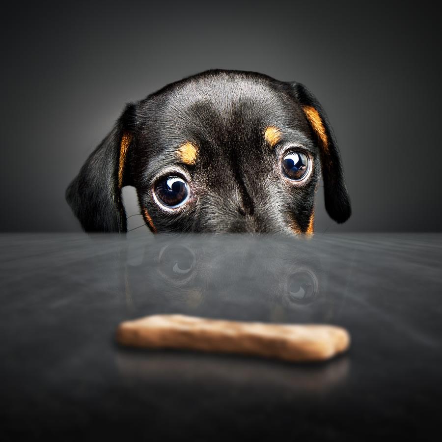 dog-treats-black-dog-looking-at-treat