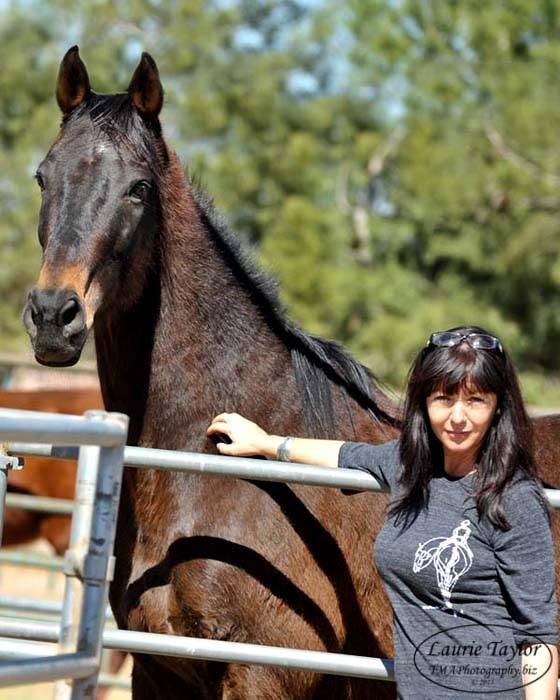 horses-cole