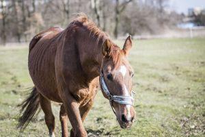 horses-rescue-horse-in-field
