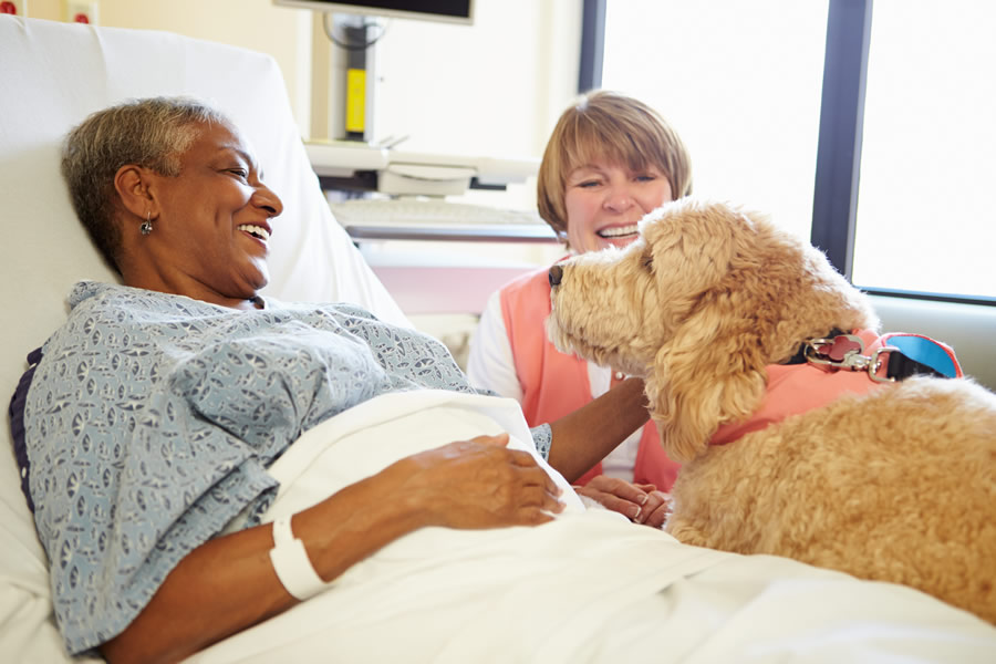 pet-therapy-dog-in-hospital-woman-in-bed