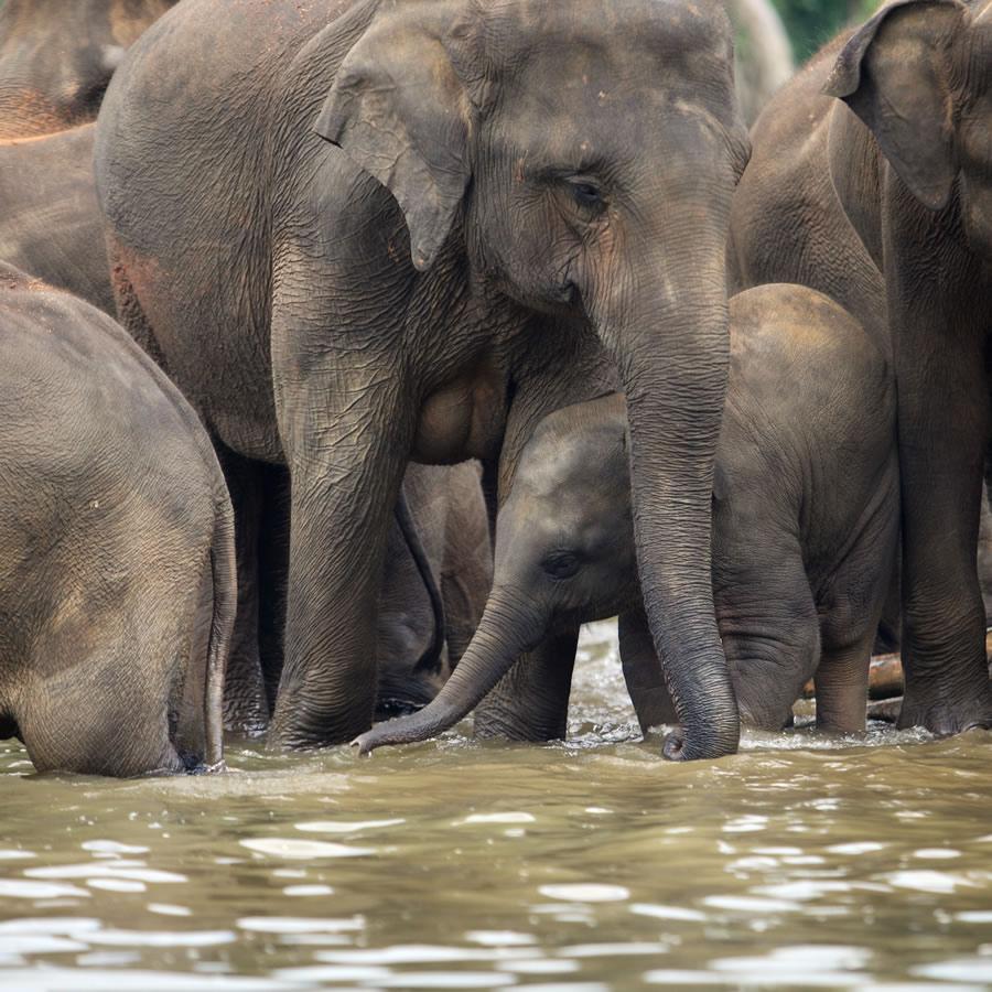 circus-elephants-group-of-elephants-with-baby