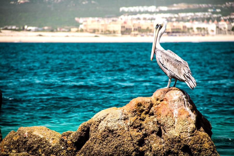 expat-pelican-mexico-beach