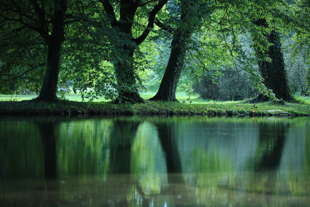 looking-good-trees-reflecting-in-pond