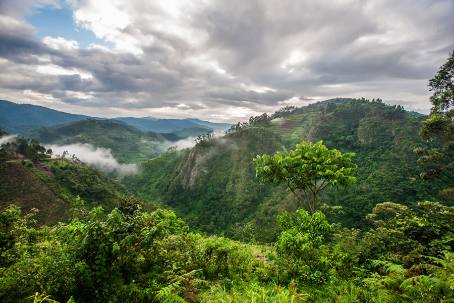 queen-of-katwe-beautiful-landscape-in-southwestern-uganda-at-the-bwindi-impenetrable-forest-national-park-at-the-borders-of-uganda-congo-and-rwanda