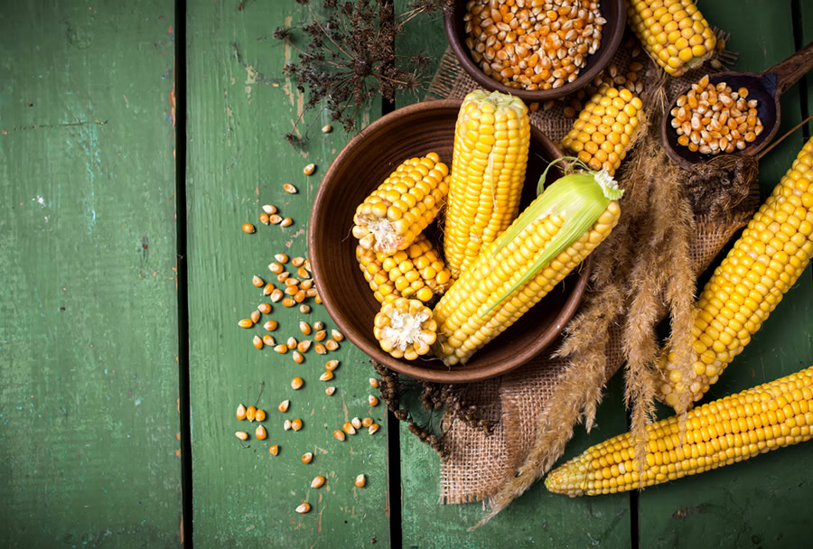 Thanksgiving Myths and Facts - corn-cobs
