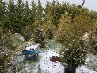 Caught with our garden tools in the snow!