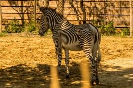 paryż zoo-6 (Kopiowanie)