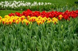 amsterdam kwiecień -18 (Kopiowanie)
