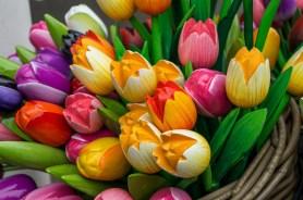 Keukenhof - podczas Festiwalu Tulipanów