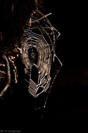 Błędne Skały - Góry Stołowe - pająk