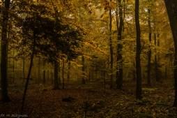 Główny Szlak Świętokrzyski - leśne ścieżki