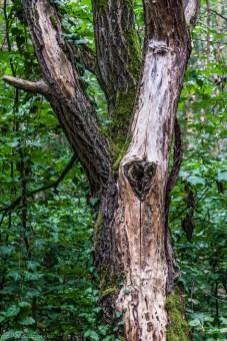 Biesak - drzewa na drodze też mogą zachwycać
