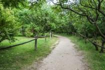 bita droga pośród zieleni