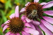 dwa kwiaty i pszczoła