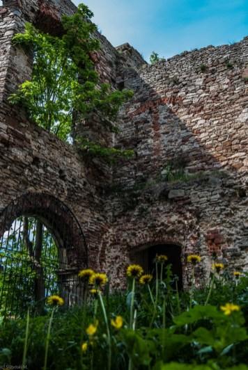 ruiny pokryte zielenią roślinności