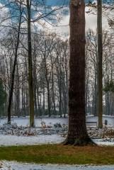 żywiec - park zamkowy zima drzewa