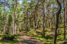 półwysep helski - las ścieżka leśna hel