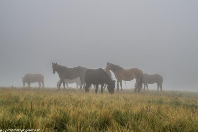 góry rodniańskie - konie w rumunii