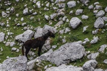 koń trekking skały - góry durmitor
