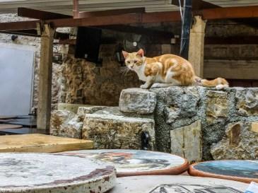Budva - koty