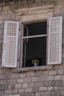 kotor ulicza okno kwiaty