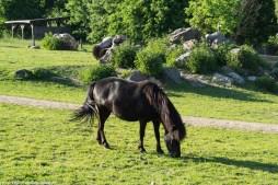 warmia - galiny stadnina koń