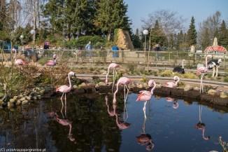 flamingi z lego w billund