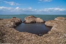 saliny - marsala nadbrzeże z wodorostów