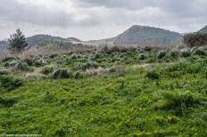 segesta - krajobraz natura park