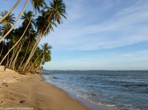 brzeg morza z palmami w mui ne