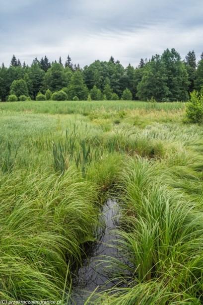 natura woda trawa krajobraz