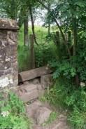 mur dziura rośliny
