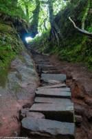 natura schody strome podejście