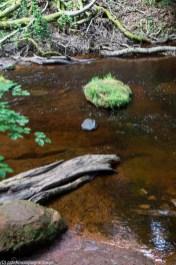 czerwona woda korzeń i trochę zieleni
