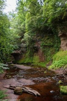 woda kanion sporo zieleni nadbrzeżnej