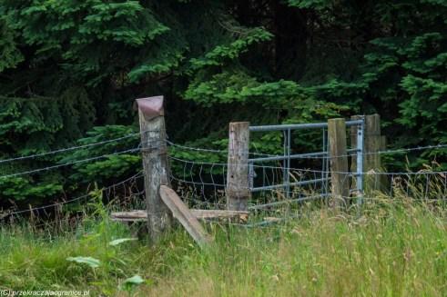 łąka ogrodzenie z drutu kolczastego