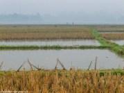 północny wietnam - pola ryżowe świt mgły