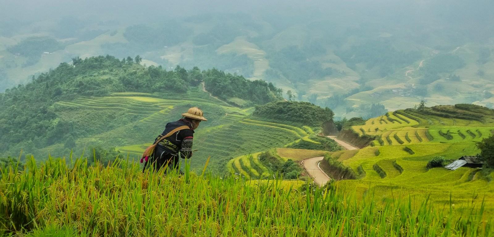 północny wietnam - sa pa krajobraz praca na polu ryżowym