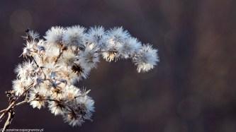 podsumowanie stycznia - Rezerwat Łęgi Czarnej Strugi zima