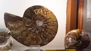 atrakcje karpacza - muzeum mineralogiczne szklarska poręba skamieniałości