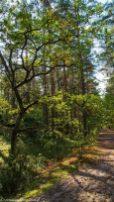 Kampinos - szlak pieszy