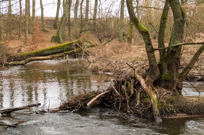 Okolice Szczecina - dolina rzeki Krąpiel