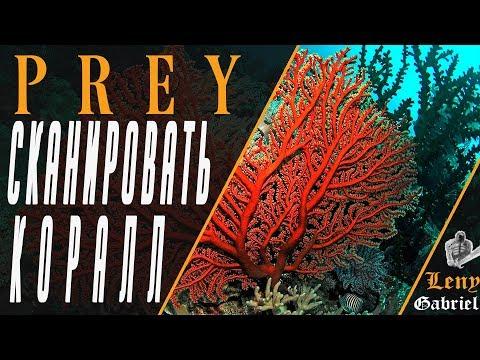Prey — Сканировать коралл