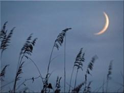 Crescent Moon Dunes