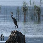 Θεσσαλονίκη: Έχει νερό αλλά δεν έχει ψάρια η Βόλβη