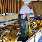 Απίστευτη ψαριά στο Ναύπλιο: Έπιασε δυο τόνους κέφαλους (Βίντεο και φωτό)
